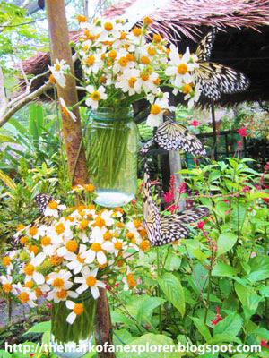 butterfly sanctuary bohol