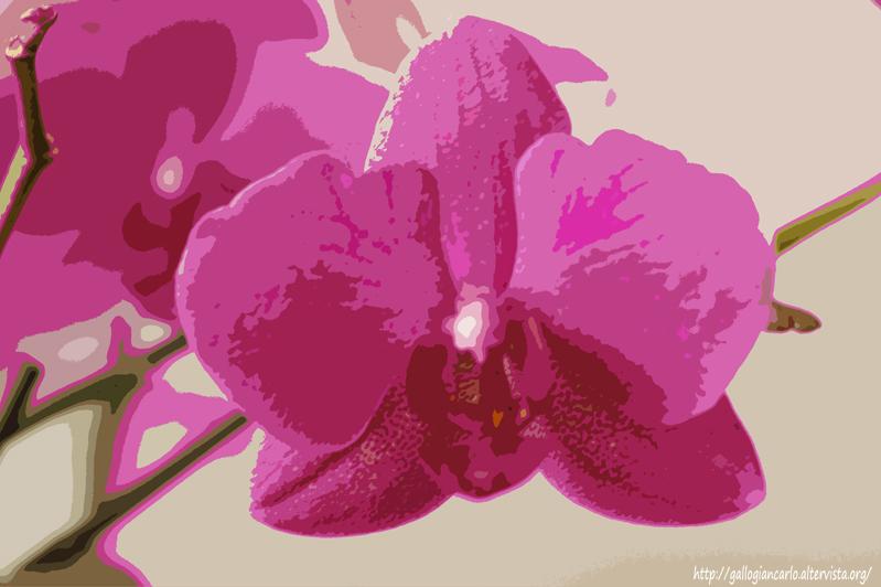 Orchidea phalaenopsis fotografie alcune elaborazioni for Nuovo stelo orchidea
