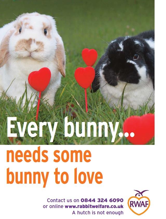 every bunny needs some bunny to love – rabbit welfare association, Ideas