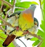 Ele te cobre com as suas penas, e debaixo das suas asas encontras refúgio. Sl 91.4
