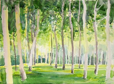 polpar grove