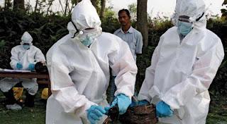 Gambar Ilustrasi Penanganan Virus Flu Burung