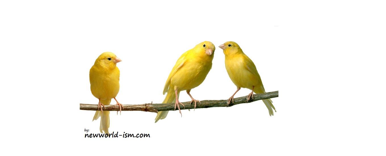 Pasar Burung Kenari Pondok Kenari Bird Farm | Share The Knownledge
