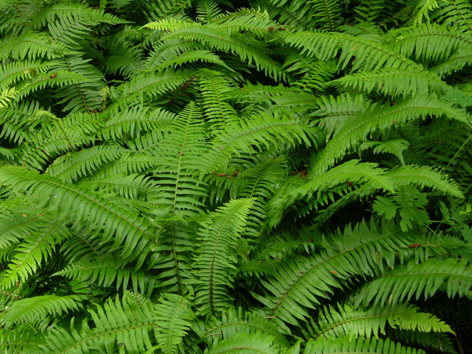 Picking ferns and evergreen products for fast cash for The evergreen