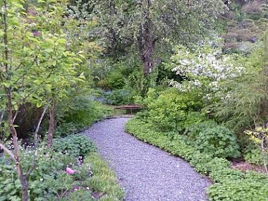 a rainy day at my Garden sateinen päivä puutarhassani