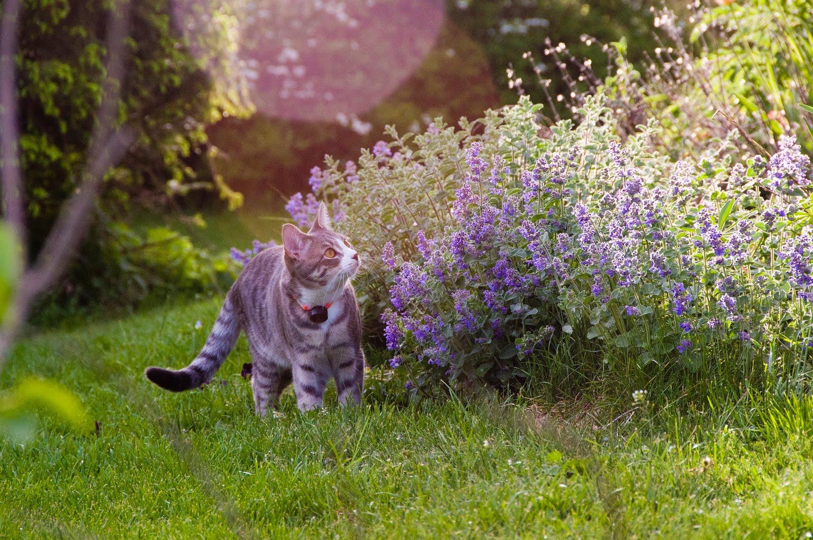 Ek gröna rum: Ännu en katt...