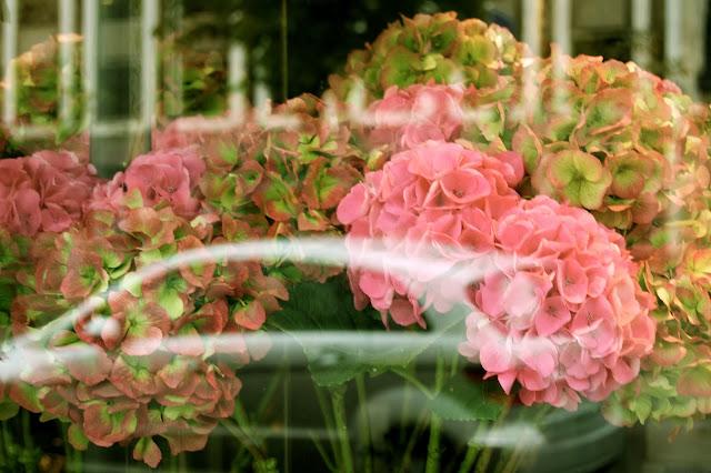 Flores en Paris