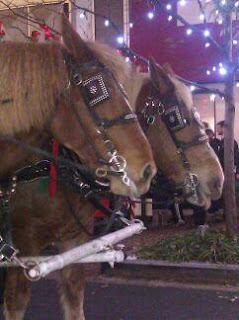 Draft horses pulling sleigh