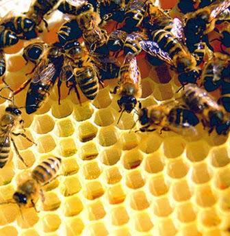qua trinh tao ra mat cua nhung chu ong