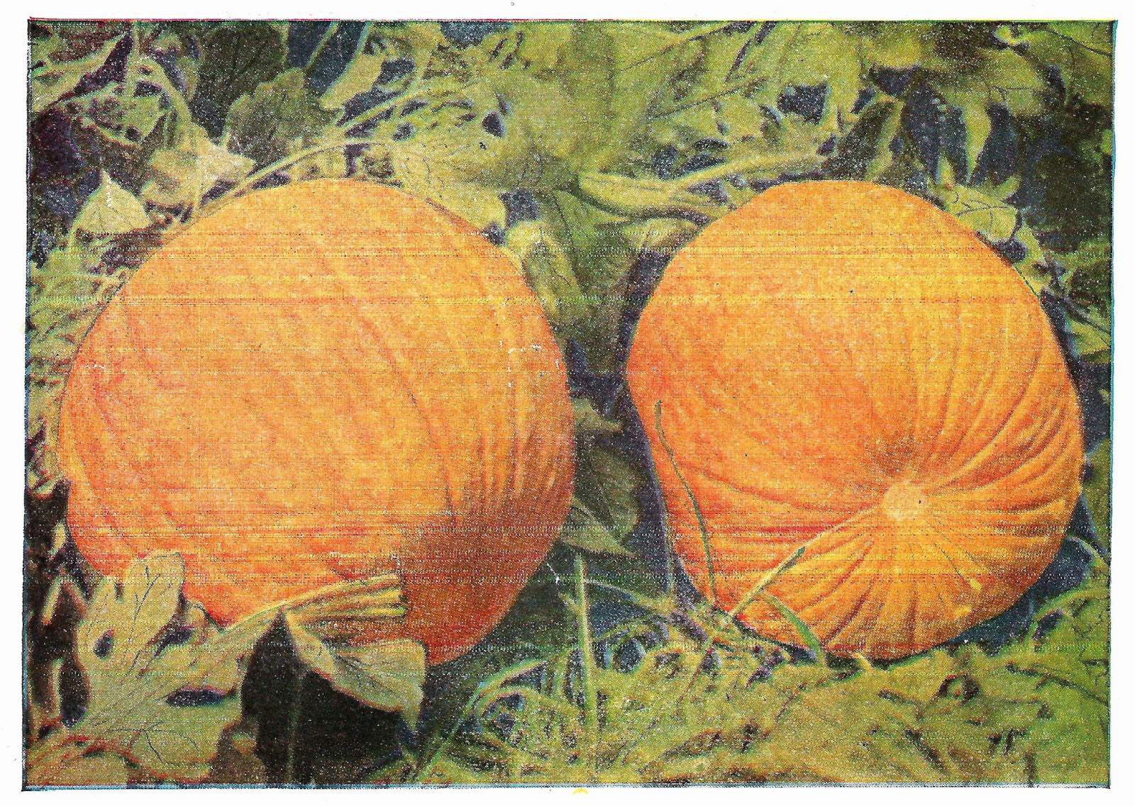 vintage pumpkin clip art - photo #14