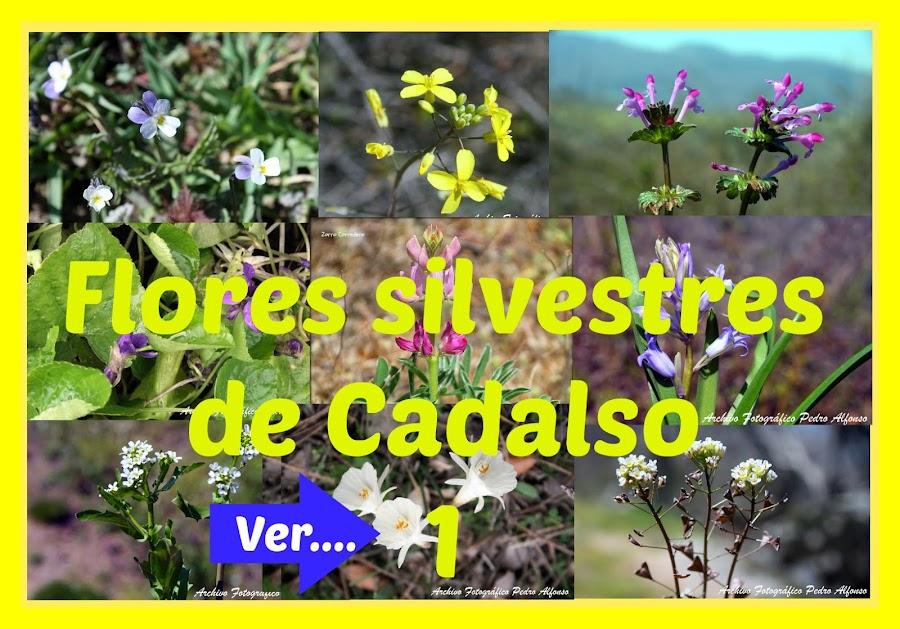 Flores de Cadalso