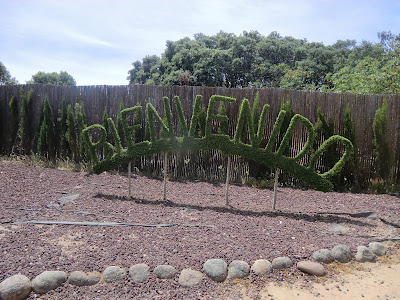 Bosque encantado de San Martin de Valdeiglesias