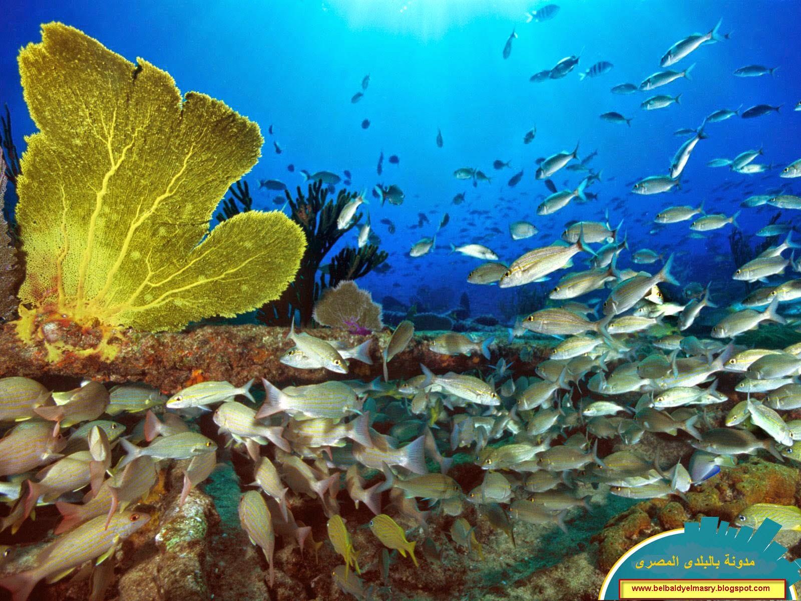 حمل وشاهد 30 خلفيه جديده لسطح المكتب لاجمل الاسماك والكائنات البحريه بحجم 25 ميجا بايت بتاريخ 8.10.2014