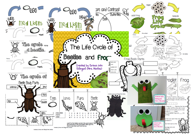 https://www.teacherspayteachers.com/Product/Life-Cycle-Unit-MealwormsBeetles-Frogs-Grades-1-3-1173497