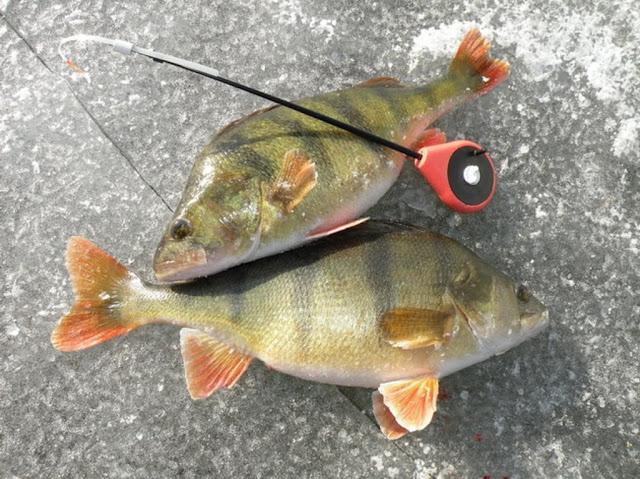 Рыбалка на окуня по первому льду