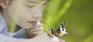 Conoscamos más sobre los insectos