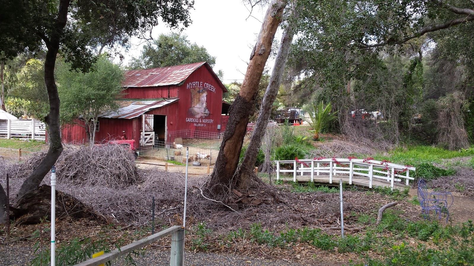 Acorn To Oak Myrtle Creek Botanical Gardens And Nursery