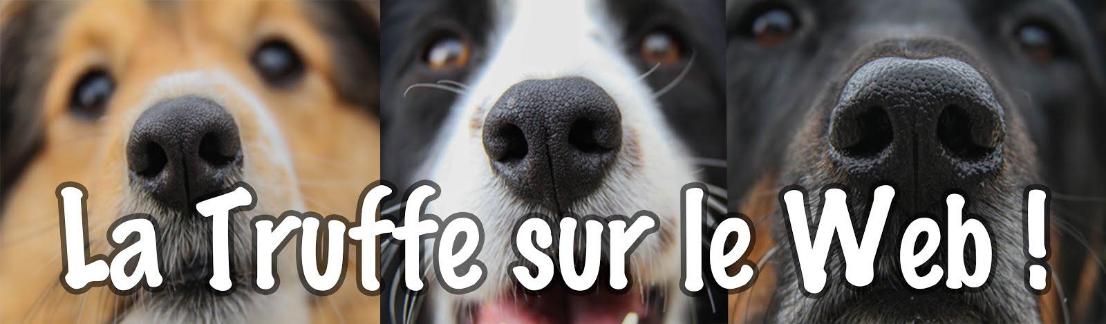 conseils en éducation canine et bien-être de votre chien, autour d'Annecy