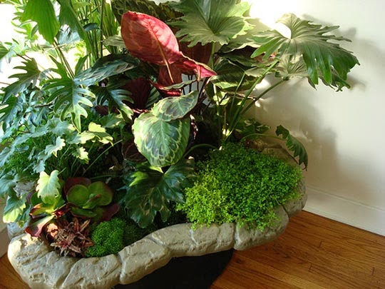 Indoor plants simple and beautiful garden park for Maintenance of indoor plants