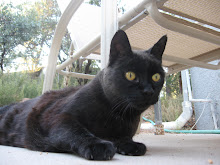 Arizona Pet-Sit
