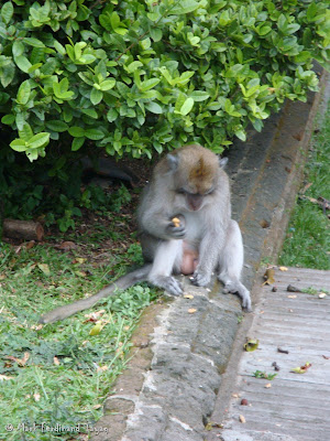 Ubud Monkey Forest Bali Photo 4