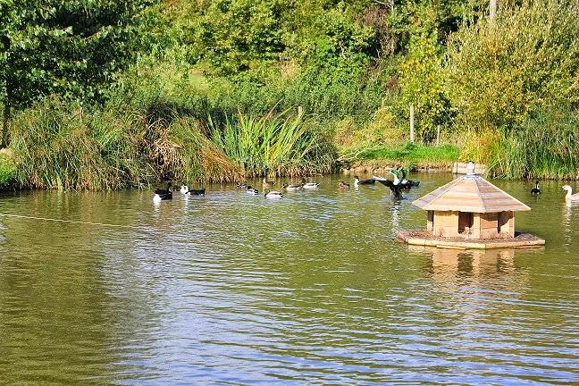 Flyte so Fancy Duck & Goose Housing