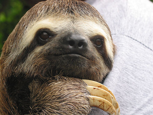 are all sloths nocturnal