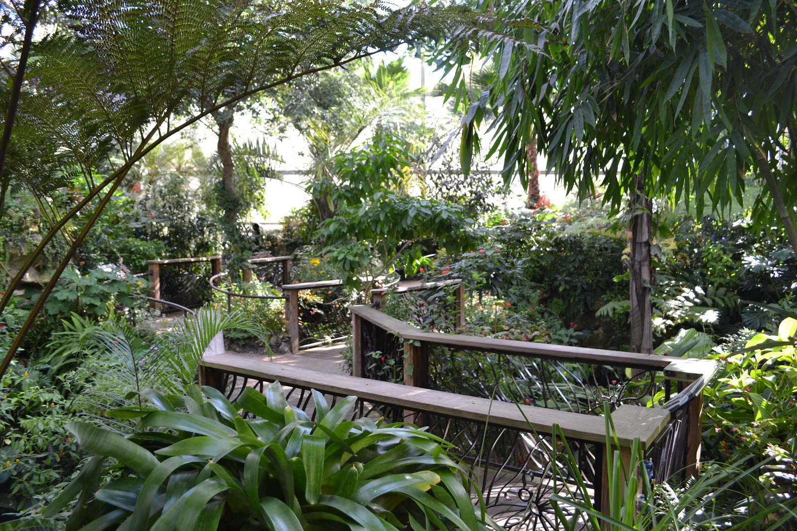Field Trip Butterfly Rainforest At The Florida Museum Of