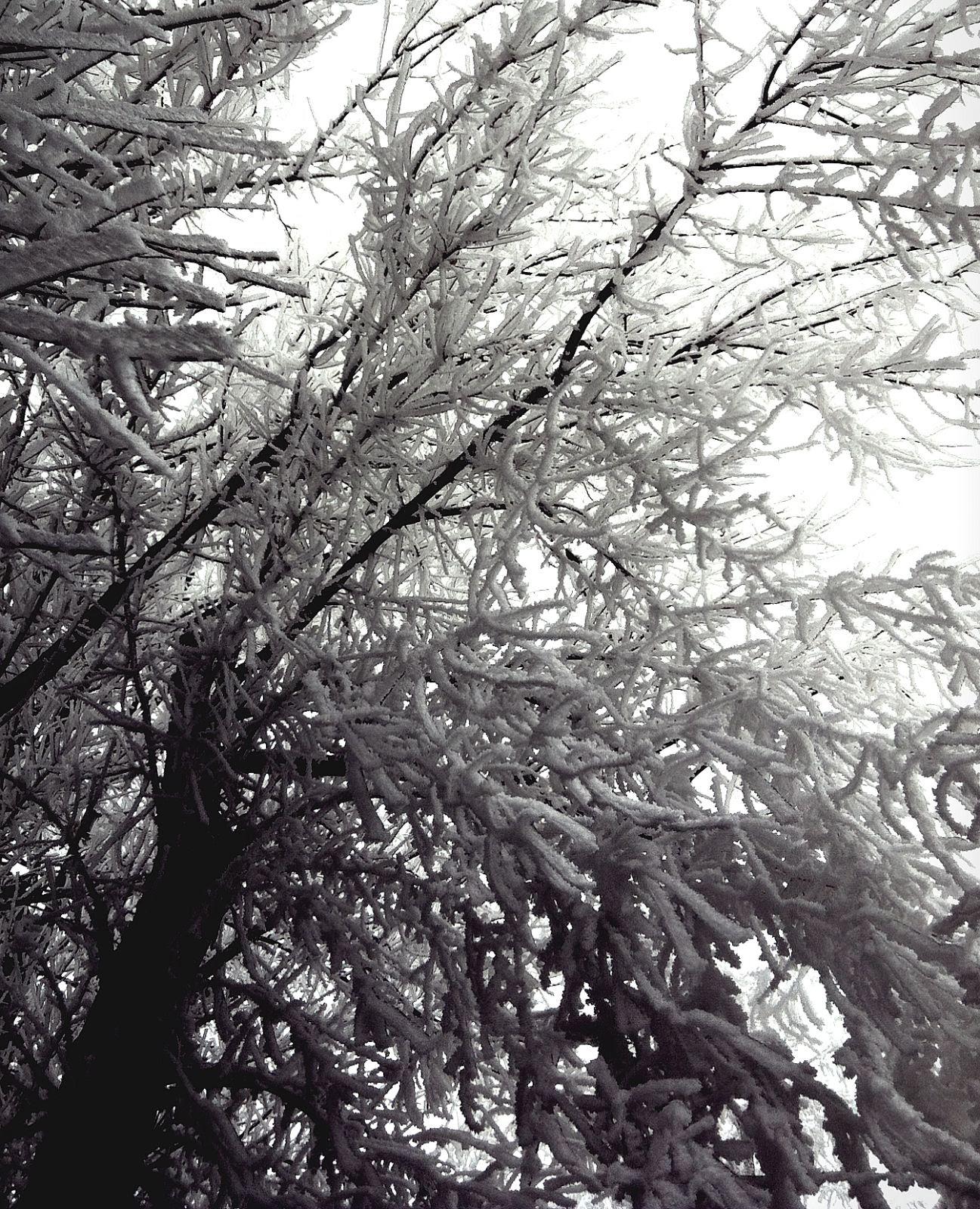 Frost Aglow 2, photo by Lorie Klahn (c)