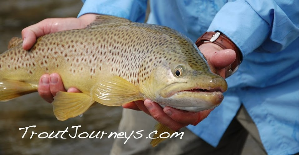 Trout Journeys