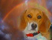 Our Angel Dog