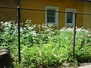 Забор из сетки-рабицы. Фото 5