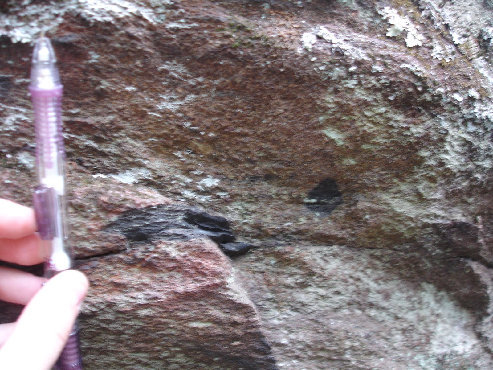here are some nice examples of ripped up clasts embedded in the swift run formation
