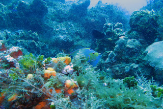 cozumel images,cozumel island,wallpaper,mexico