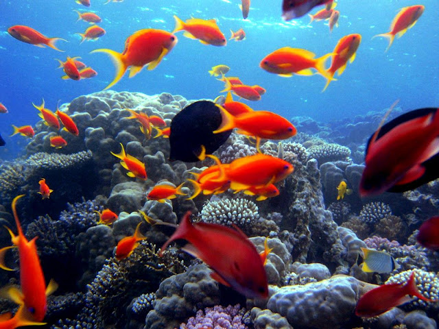 Deep sea Beautiful fishes