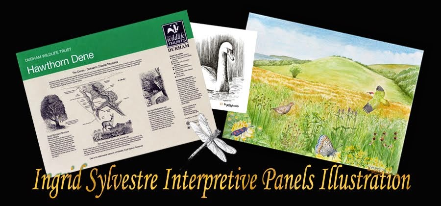 Ingrid Sylvestre Interpretive Panel Illustration