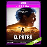 El Potro: Lo Mejor Del Amor (2018) BRRip 720p Audio Español-Ingles