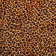 Leopardo y diamantes