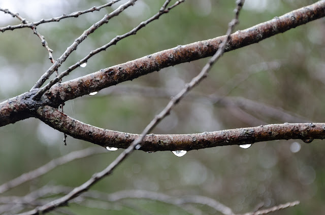 water droplets on a branch