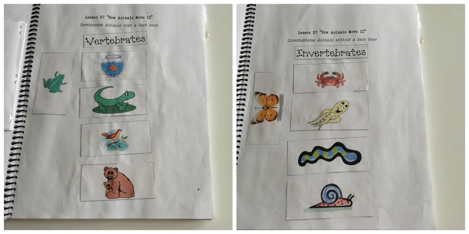 TeacherMomPlus3 Vertebrates and Invertebrates Unit Study – Invertebrates Worksheet