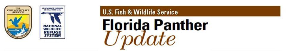 Florida Panther Update