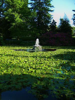 Water Fountain Picture- Beacon Hill Park, Victoria BC