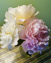Peonies In May