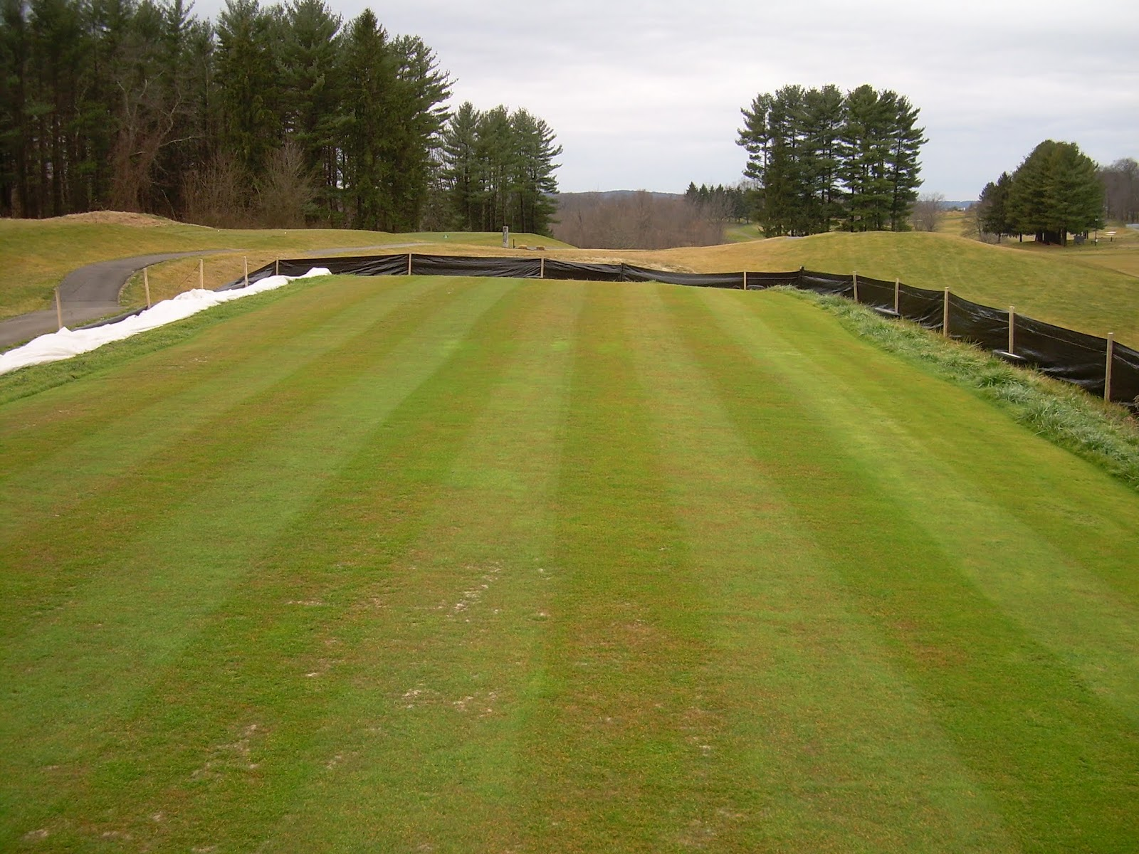This photo was taken yesterday after the turf blanket was pulled off and  the nursery was mowed  While working on this nursery  We fielded many  nervous. Greystone Golf Course Turfgrass Maintenance  Creeping Bentgrass