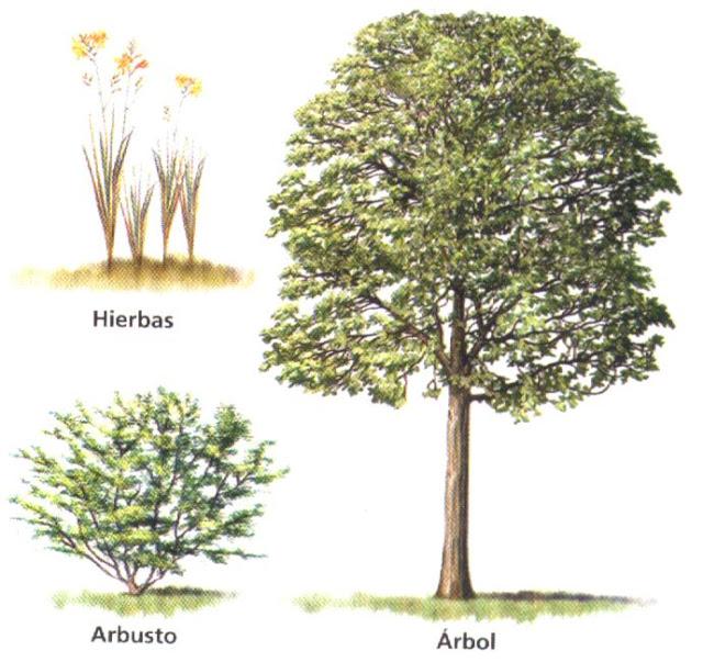 El rbol del saber rboles arbustos y hierbas - Arboles y arbustos ...