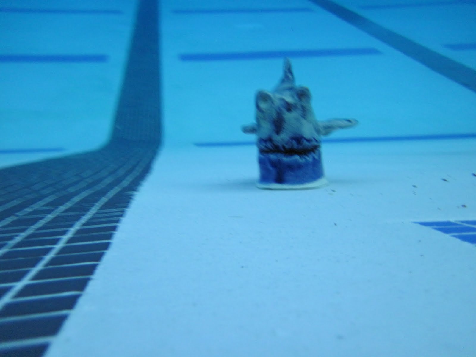 olympic hopeful - Olympic Swimming Pool Underwater