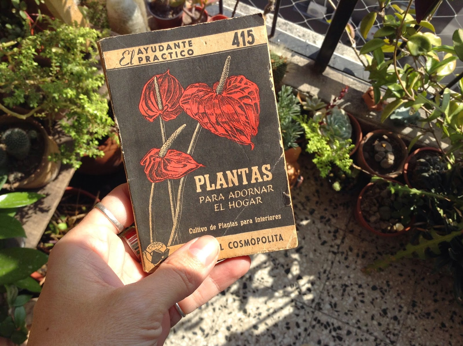 Un Libro Por D A Libro Invitado Plantas Para Adornar El