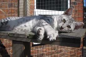 """قط مصري """"ناكر للجميل"""" ببريطانيا !!!! - Egyptian cat in london"""
