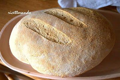 pane giallo con lievito madre ricetta di un pane speciale