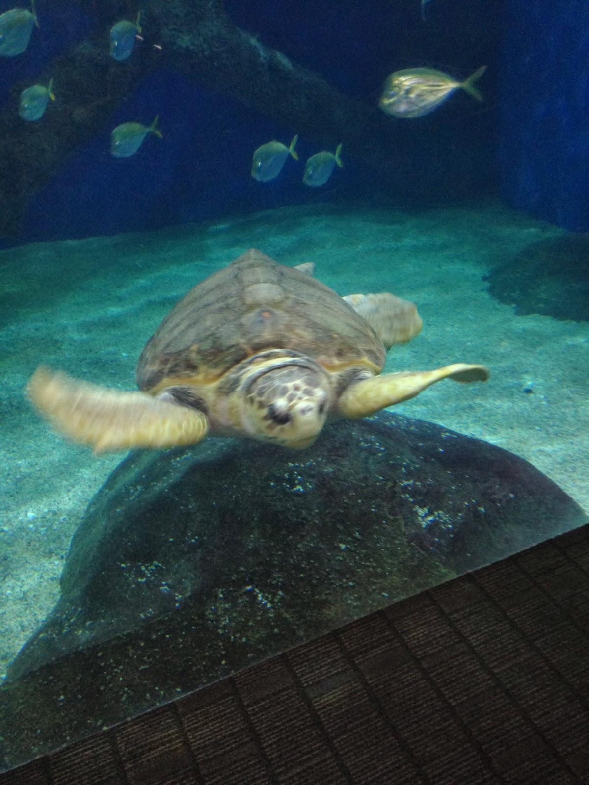 Fun Things To Do With Kids Virginia Aquarium Marine